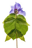 Poupée de tête et de fleurs de pavot image libre de droits