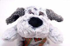 Poupée grise de chien sur le blanc Image stock