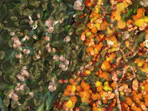 Pour cent de légume fruit Illustration Libre de Droits