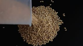 Pour circle of grain stock video