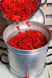 Pour currants in the juice extractor. Pour ripe red, washed currants in the steam juicer to make currant syrup Royalty Free Stock Images