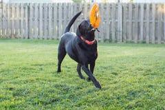 Pour l'amour du frisbee Image libre de droits