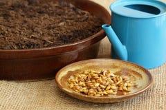 Pour la collecte verte de Pâques obtenez la saleté et les graines prêtes Image stock