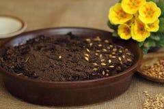 Pour la décoration de Pâques - obtenez la saleté et les graines prêtes Image libre de droits