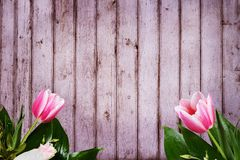 Pour le fond de félicitation avec des tulipes dans le premier plan Photographie stock libre de droits