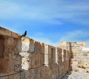 Pour le mur d'oiseaux - une place de reste Images stock