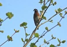 Pour les oiseaux Image libre de droits