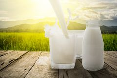 Pour the milk into a glass splash on wooden terrace with green meadow and mountain in the morning with the sunbeam Royalty Free Stock Photo