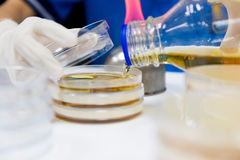 The Pour Plate method. Where in the sample is suspended in a petri dish Stock Images