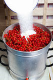 Pour sugar on the currants. Pour sugar on the red currants in the steam juicer Stock Photography