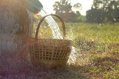 Pour the water from the bowl into the basket. Of a hot meal quickly splashed beautifully. During the sunset landscape on the field Royalty Free Stock Photography