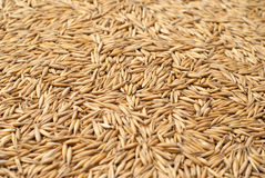 Poured oat Royalty Free Stock Image