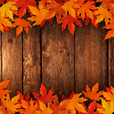Poured onto dry leaves in autumn wood Royalty Free Stock Images