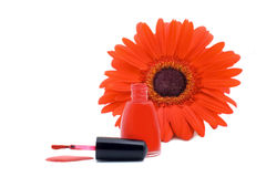 Poured red nail varnish Stock Images