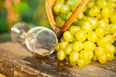 Poured wine glass and fresh grapes Royalty Free Stock Image