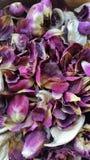 Pouri del vaso di Rosa Fotografia Stock