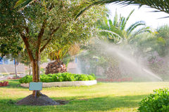 Pouring. Wet green olive trees and date palm. Pouring at the hot day in Greece royalty free stock images