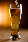 Pouring beer. Into a glass Stock Photography