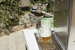Pouring beer, Cooling device for dispensing beer Stock Photos