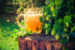 Pouring beer tankard background hop cones Stock Image