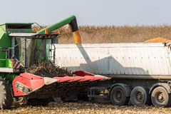 Pouring corn grain into tractor trailer Royalty Free Stock Photo