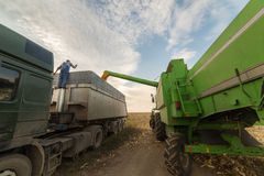 Pouring corn grain into tractor trailer Stock Images