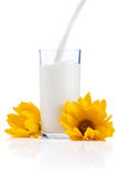 Pouring a Fresh Glass of Milk and yellow flowers Stock Photos