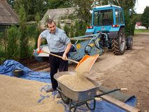 Pouring the grain 2 Stock Photos