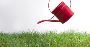 Pouring grass Stock Image