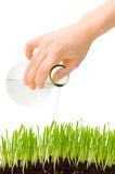 Pouring grass Stock Photography