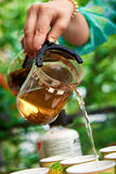Pouring green tea on nature Royalty Free Stock Image