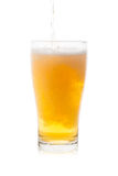 Pouring isolated single glass of beer with bubbles Stock Photos