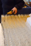 Pouring Many Glasses of Champagne Royalty Free Stock Photography