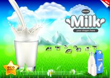 Pouring milk ads. Cows on green field vector background Royalty Free Stock Photo