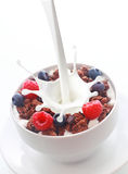Pouring milk into breakfast cereal with berries Royalty Free Stock Images