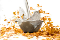 Pouring milk into corn flakes creating splash Stock Images