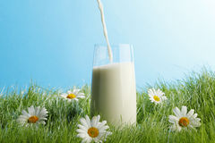Pouring milk in a glass Stock Photos