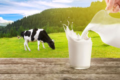 Pouring milk with splashes Royalty Free Stock Image