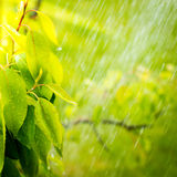 Pouring rain in the summer Royalty Free Stock Photos