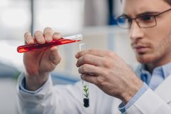 Pouring reagent into flask with plant. Male biologist pouring reagent into flask with plant in laboratory Royalty Free Stock Photography