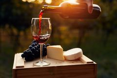 Pouring red wine into the glass in the vineyard. At sunset stock images