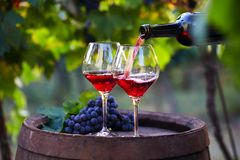 Pouring red wine into glasses royalty free stock images