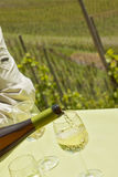 Pouring riesling in vineyard on summer day Stock Image