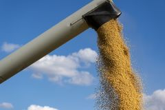 Pouring soy bean grain into tractor trailer after harvest royalty free stock photos