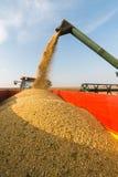 Pouring soy bean Stock Photos