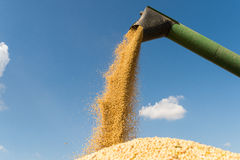Pouring soy bean Royalty Free Stock Images