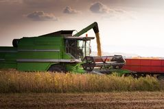 Pouring soy bean into tractor trailer after harvest Royalty Free Stock Photo