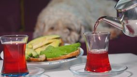Pouring tea into glass Turkish cup. Pouring tea into Turkish glass cup. Avocado sandwiches and sleeping dog on background stock video