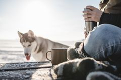 Pouring the tea from the thermos. Outdoors. Cold snow and spring light. Dog on the background royalty free stock photo