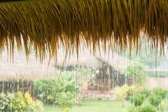 Pouring tropical rain Stock Photos